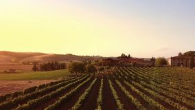 Drone video - flying over an Italian vineyard. Tuscany Italy stock footage