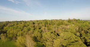 Drone View Above Trees With Blue Sky White Clouds. View From Drone Above Trees At Park And Woods Suburbs With Blue Sky And White Clouds Green Grass stock footage