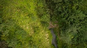 Drone view of forest and stream stock image