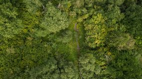 Drone view of forest and stream royalty free stock photo