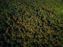 Drone view of stunning colorful autumn fall forest at sunset Royalty Free Stock Photos