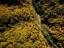 Drone view of stunning colorful autumn fall forest at sunset Royalty Free Stock Image