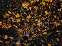 Drone view of stunning colorful autumn fall forest at sunset Royalty Free Stock Photography