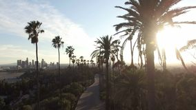Drone view through tall palm trees to downtown Los Angeles stock video