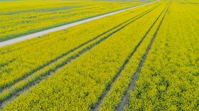 Drones flight and aerial view over a field.  stock photos