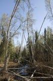 Dronken Bomen stock afbeeldingen