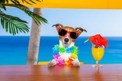 Dronken Hond stock foto's