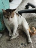 Dronken kat royalty-vrije stock foto's