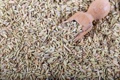 Droog Anise Seed of Anijszaad als als Achtergrond stock fotografie