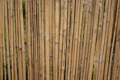 Droog bamboe in rij met ruimte Stock Afbeeldingen