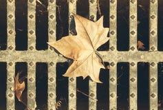 Droog blad stock afbeelding
