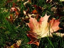 Droog blad in groen gras Royalty-vrije Stock Foto's