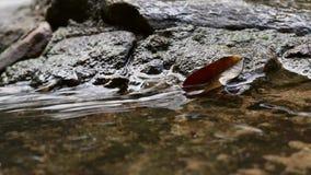 Droog blad op de rotsen met water die vloeien door stock video