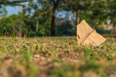 Droog blad op grasvloer in het park Stock Foto's