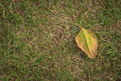 Droog blad op grasvloer in hoogste hoekmening Royalty-vrije Stock Foto