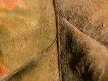 droog blad op macroschaal stock afbeeldingen