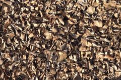 Droog Bladeren Royalty-vrije Stock Afbeeldingen