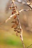 Droog Bladeren Stock Fotografie