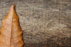 Droog bladeren aan de kant van de oude houten achtergrond Royalty-vrije Stock Afbeeldingen