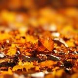 Droog bladeren in de herfst Stock Foto