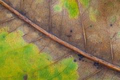 Droog bladeren en groene bladtextuur als achtergrond Stock Foto's
