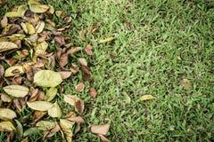 Droog bladeren op de groene grastuin Royalty-vrije Stock Fotografie