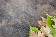 Droog bladeren op de lagere juiste rand van een lijst stock fotografie