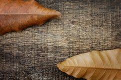 Droog bladeren op de oude houten achtergrond Stock Afbeeldingen