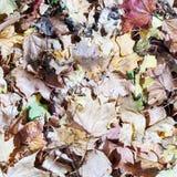 Droog bladeren op de vloer in autmn Stock Afbeelding