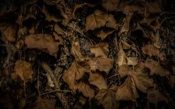 Droog bladeren op een boom Royalty-vrije Stock Afbeelding