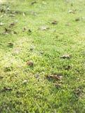 Droog bladeren op een gebied Stock Afbeeldingen
