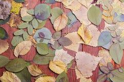 Droog bladeren op een houten achtergrond Stock Afbeeldingen