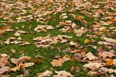 Droog bladeren op een lown Stock Foto's