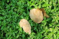 Droog bladeren op gras Stock Foto