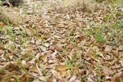 Droog bladeren op grond in de herfsttuin Stock Afbeelding
