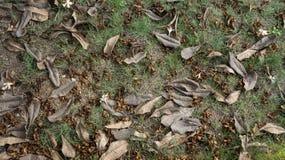 Droog bladeren op het gazon Royalty-vrije Stock Foto