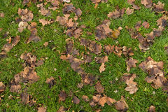 Droog bladeren op het gras Stock Afbeeldingen