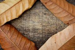 Droog bladeren op houten textuur Royalty-vrije Stock Foto's