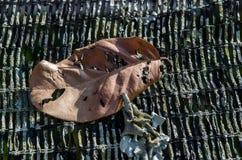 Droog bladeren op korstmos Royalty-vrije Stock Afbeeldingen