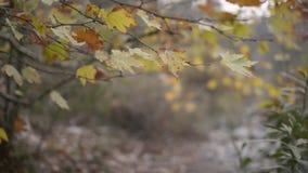 Droog bladeren op takken in de winter stock footage