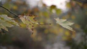 Droog bladeren op takken in de winter stock video