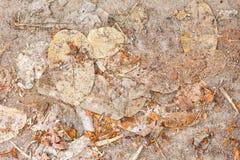 Droog bladeren ter plaatse Stock Afbeeldingen