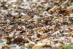 Droog bladeren ter plaatse Stock Foto's