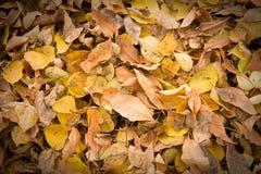 Droog bladerenachtergrond Stock Foto's