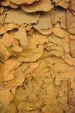 Droog bladerenbehang in Thailand Stock Afbeeldingen