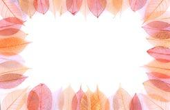 Droog bladerenframe stock foto's