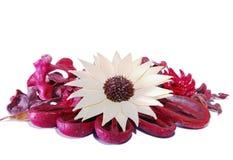Droog bloem op rode achtergrond van droge bladeren Royalty-vrije Stock Foto