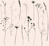 Droog bloemen en gras royalty-vrije illustratie