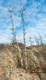 Droog bos op granietrots Royalty-vrije Stock Foto
