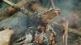 Droog brandhout die in bos natuurramp in hout branden Sintels in vlam stock video